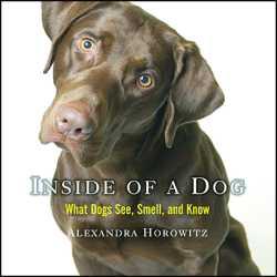Inside-of-a-Dog