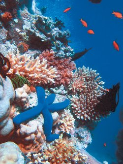 the reef a passionate history